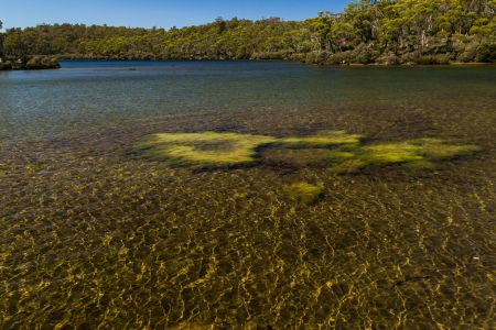 Aquatic Plants in Lake Malbena (Lyndsey Evans)